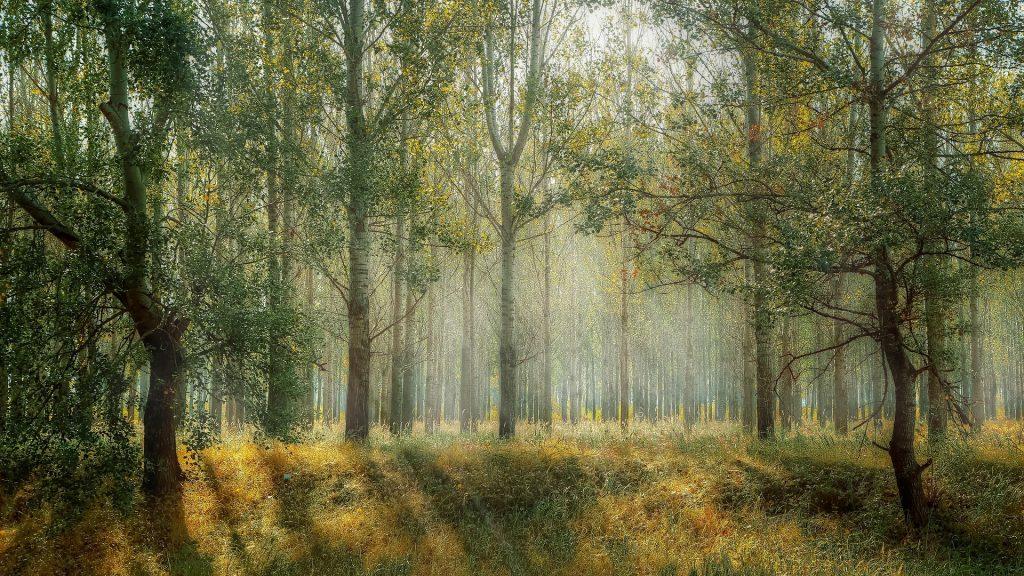 forest-sanctuary